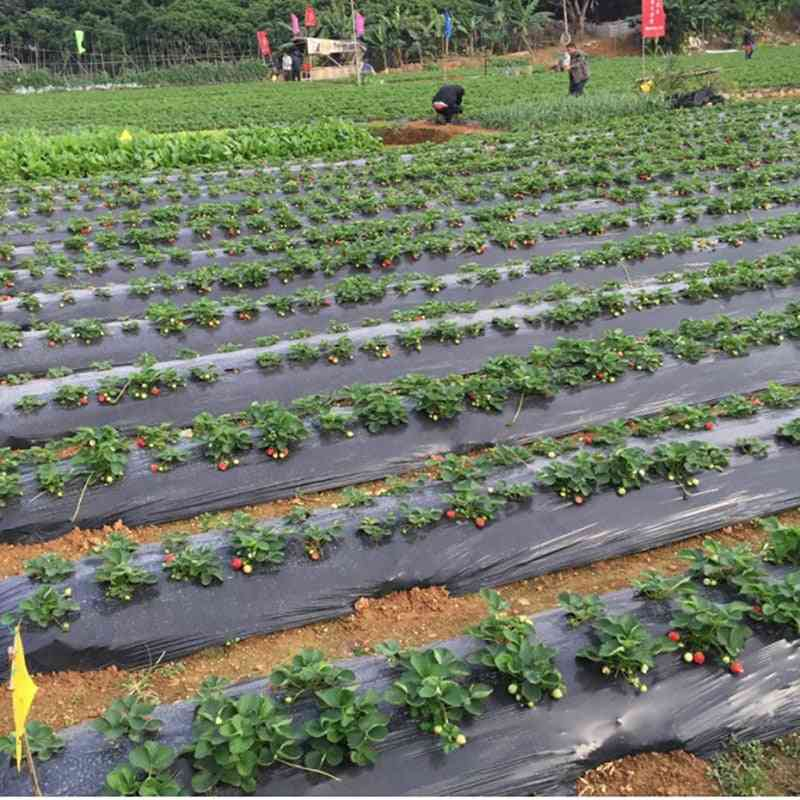 Vegetable Membrane- Agricultural Plants Mulching Seeding Plastic Perforated Pe Film