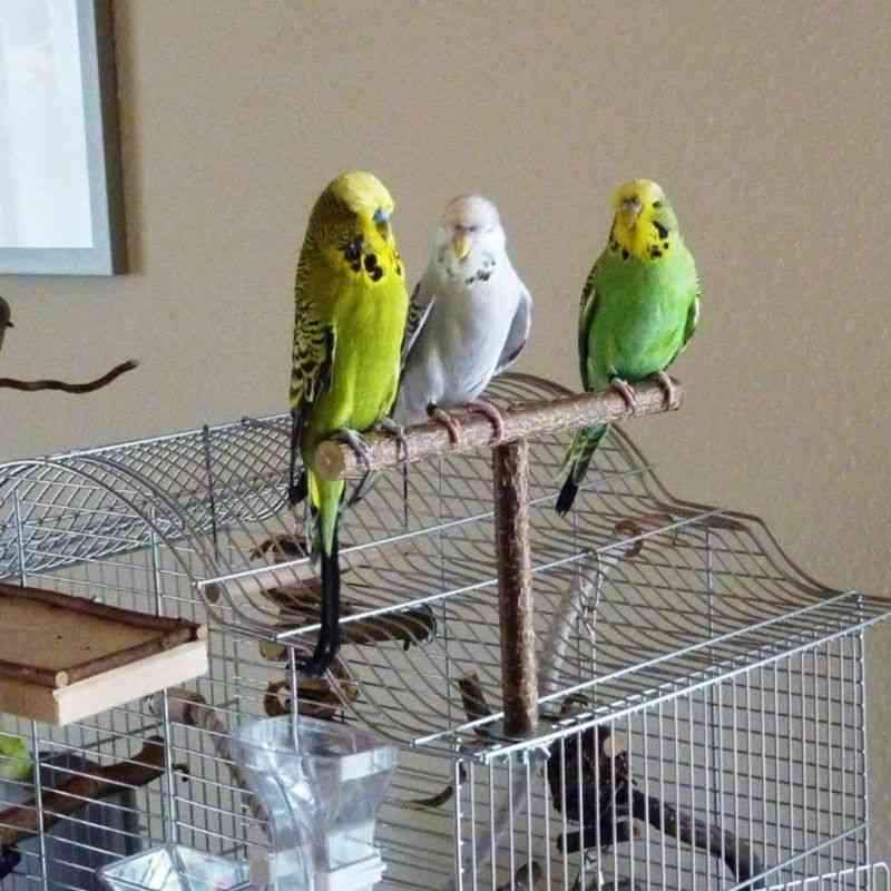 Parrots Bird Stand Bar, Parrot Bite Chew Swing Pet Bracket Wooden Rest Play Perches Supplies Birdcage Accessories