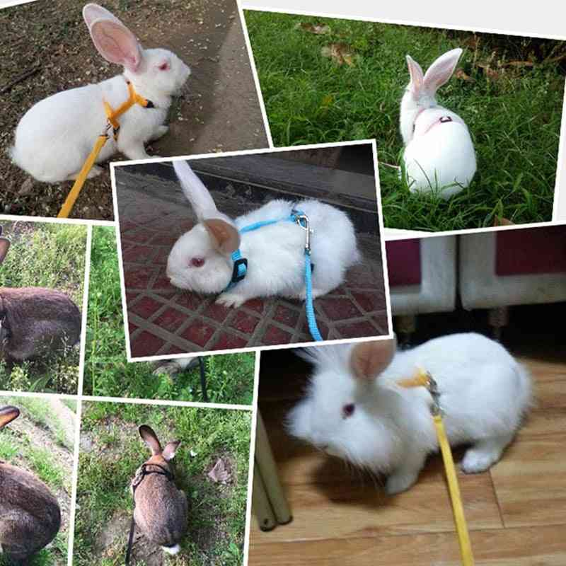 Pet Rabbit, Soft Harness-adjustable Rope For Running And Walking