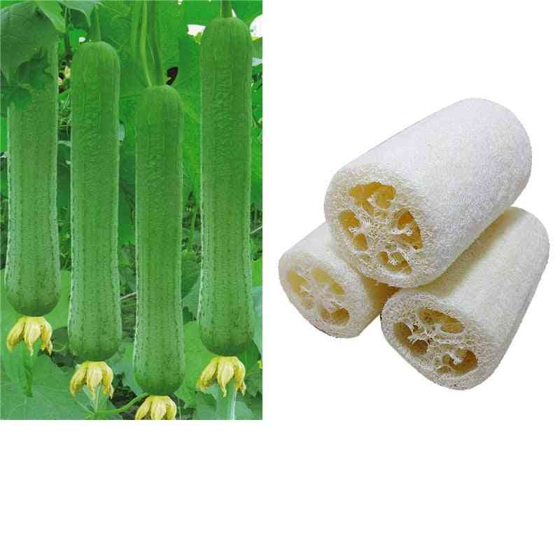 Household Natural Loofah-scrubber & Spa Massage Pad
