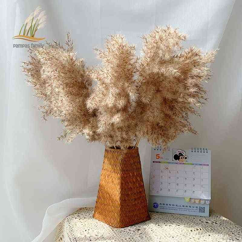 Pampas Grass Dried Feather Flowers Bunch, Plants For Home