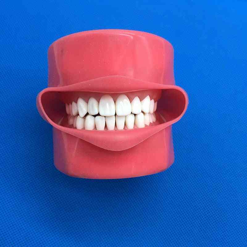 Student Learning Model Dental Phantom Head Teeth Model, Silicone Mask With 28 Pieces Screw Fixed Teeth