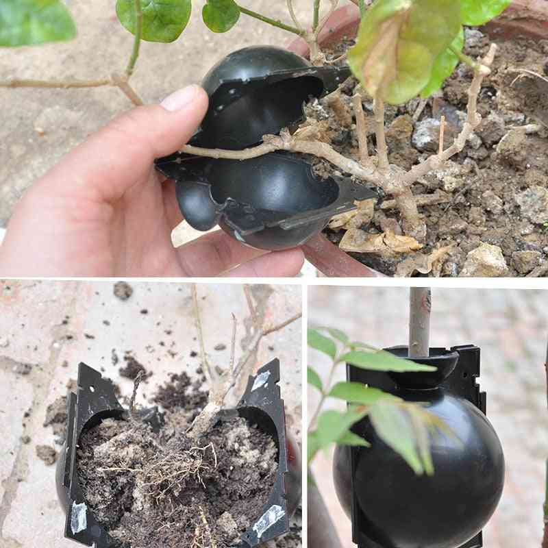 Ball Plant Root Growing Box, Grafting, Breeding Case For Garden Plant