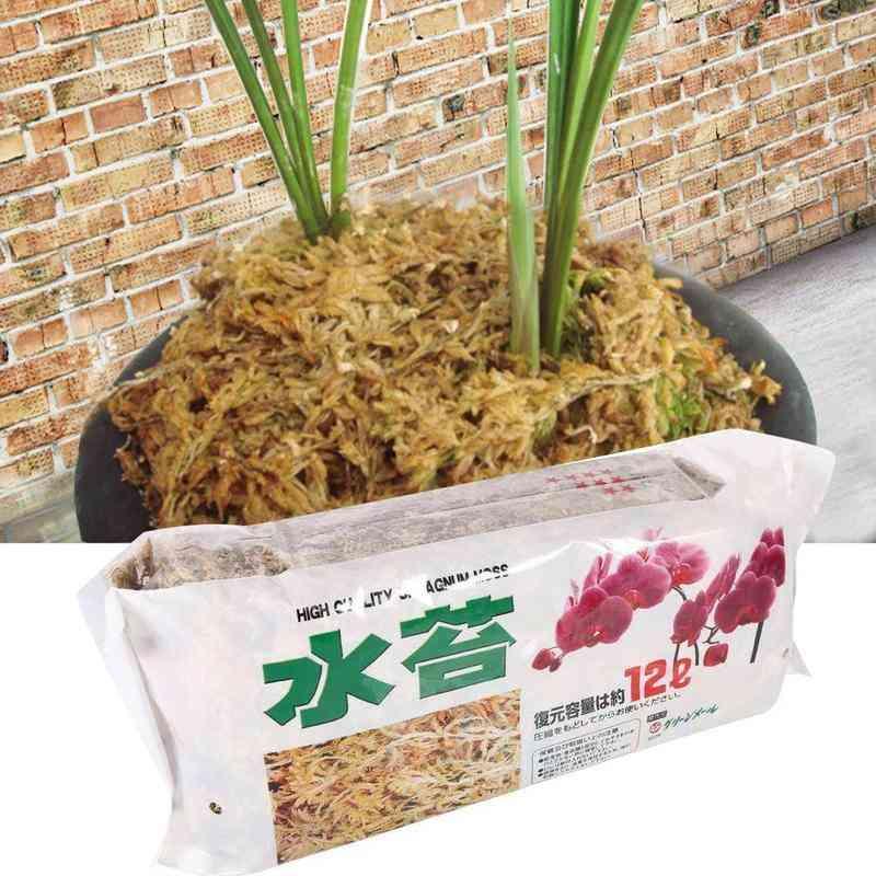 Organic Fertilizer Sphagnum Moss For Orchid Musgo Phalaenopsis Flower Garden