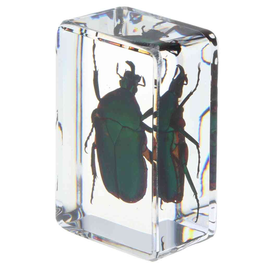 Real Insect Specimen School Educational Teaching Aids - Green Scarabaeus