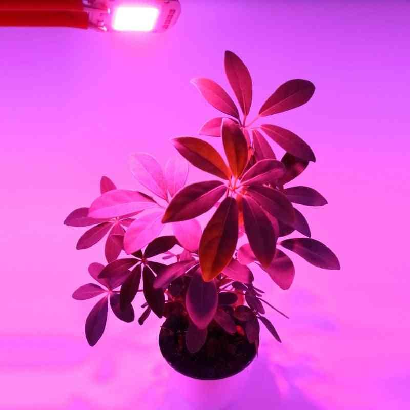 Led Cob Chip For Indoor Plant Seedlingand  Flower Growth , Light Full Light Spectrum ,220v ,110v, 20w ,30w, 50w