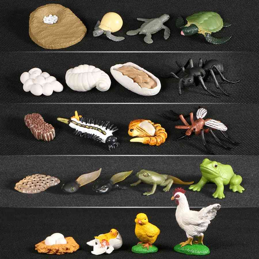 Animals Growth Cycle Life Model - Simulation Action Figures For Teaching