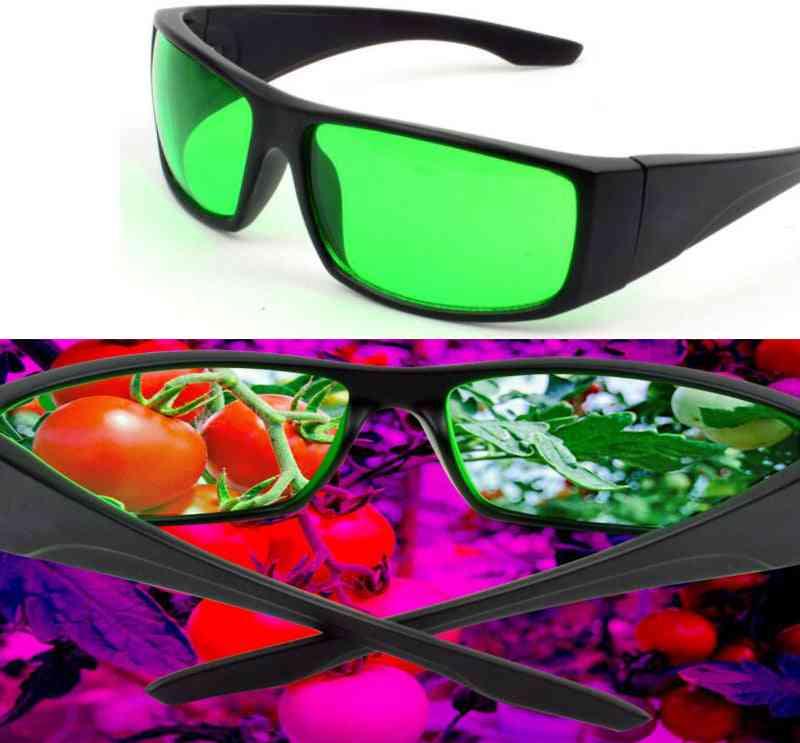 Grow Glasses Protective Indoor Hydroponics Led Grow