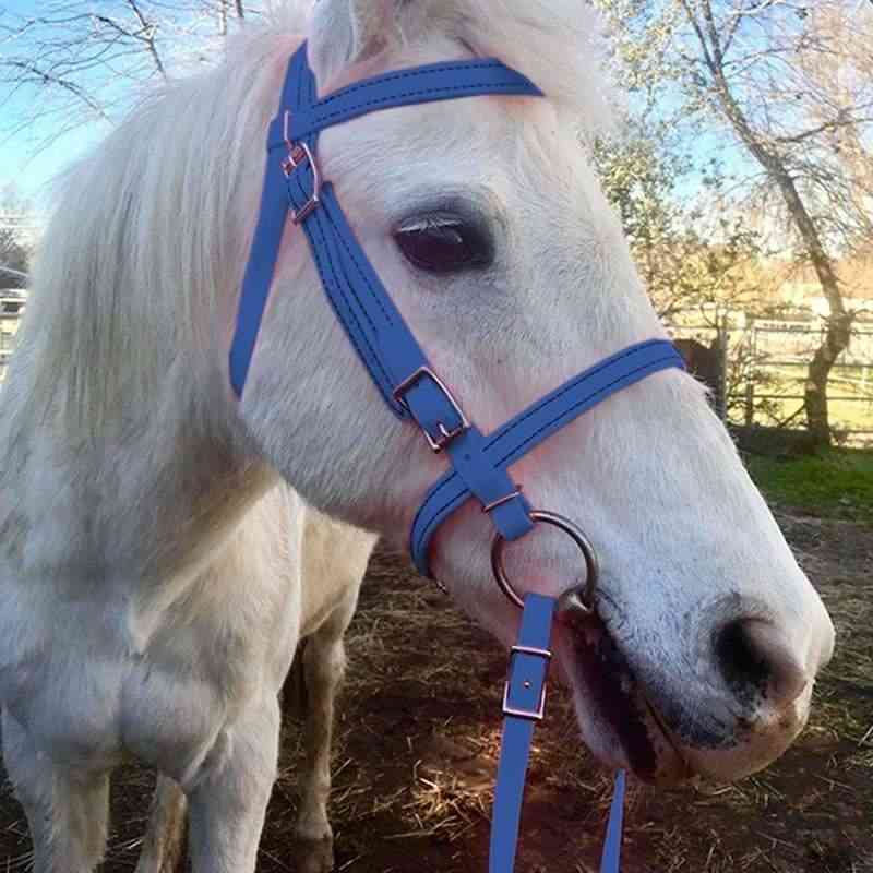 Horse Head Collar, Pp Thickened Adjustable Safety Halter Riding Belt, Training Rope Equestrian Equipment