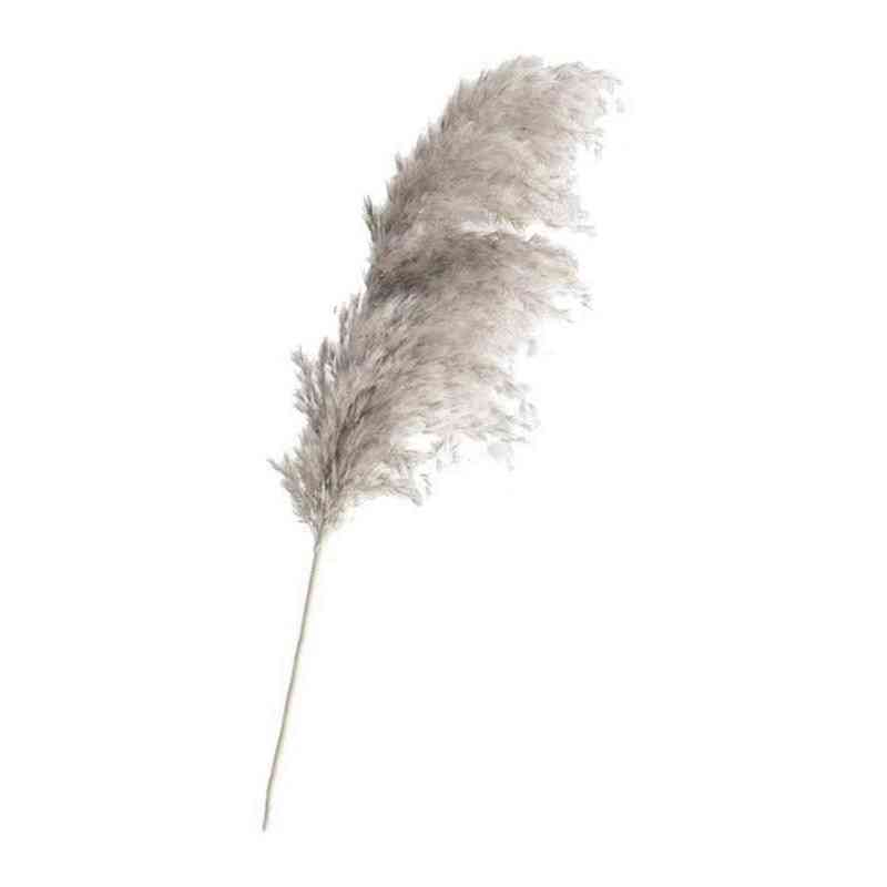 Bulrush Natural Dried Small Pampas Grass Phragmites Reed Artificial Plants