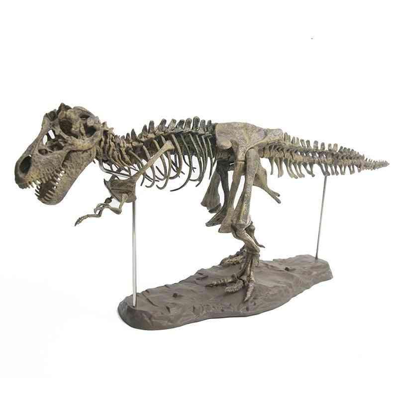 3d- Dinosaur Skeleton, Educational Biology, Biologia Model Toy
