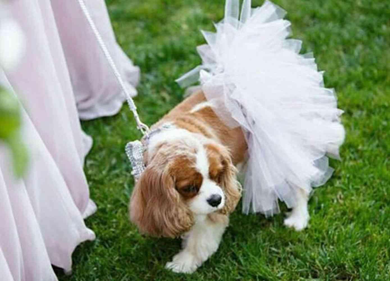 White Bridal Dog Tutu Skirt