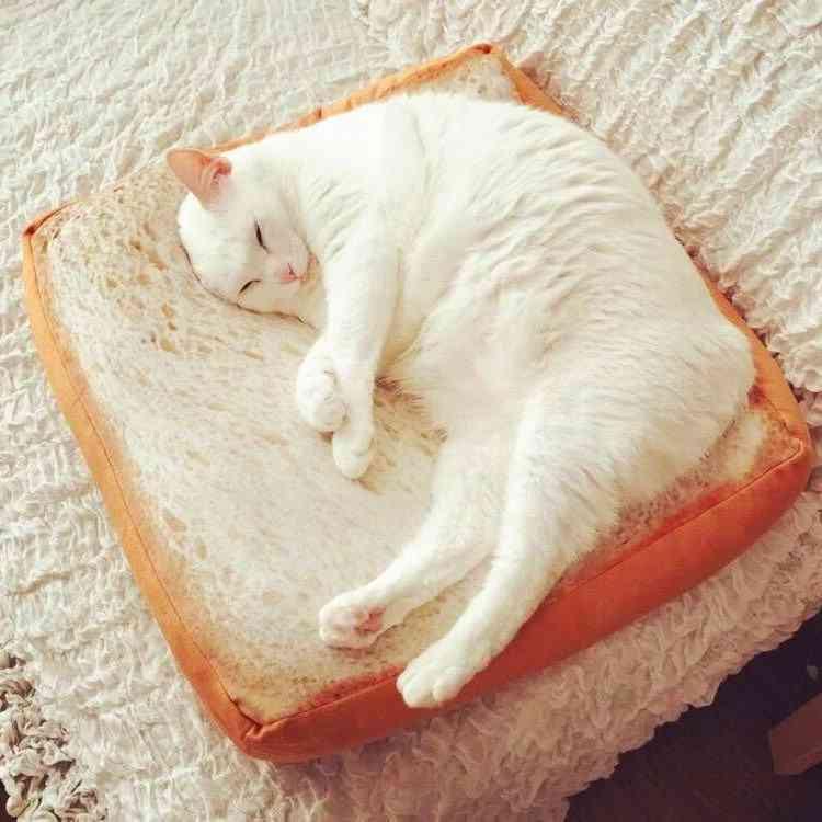 Toast Cat Pad