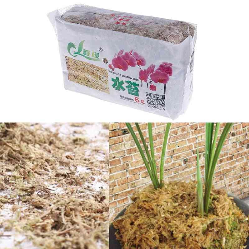 Sphagnum Moss Garden Supplies, Nutrition Organic Fertilizer For Orchid Phalaenopsis