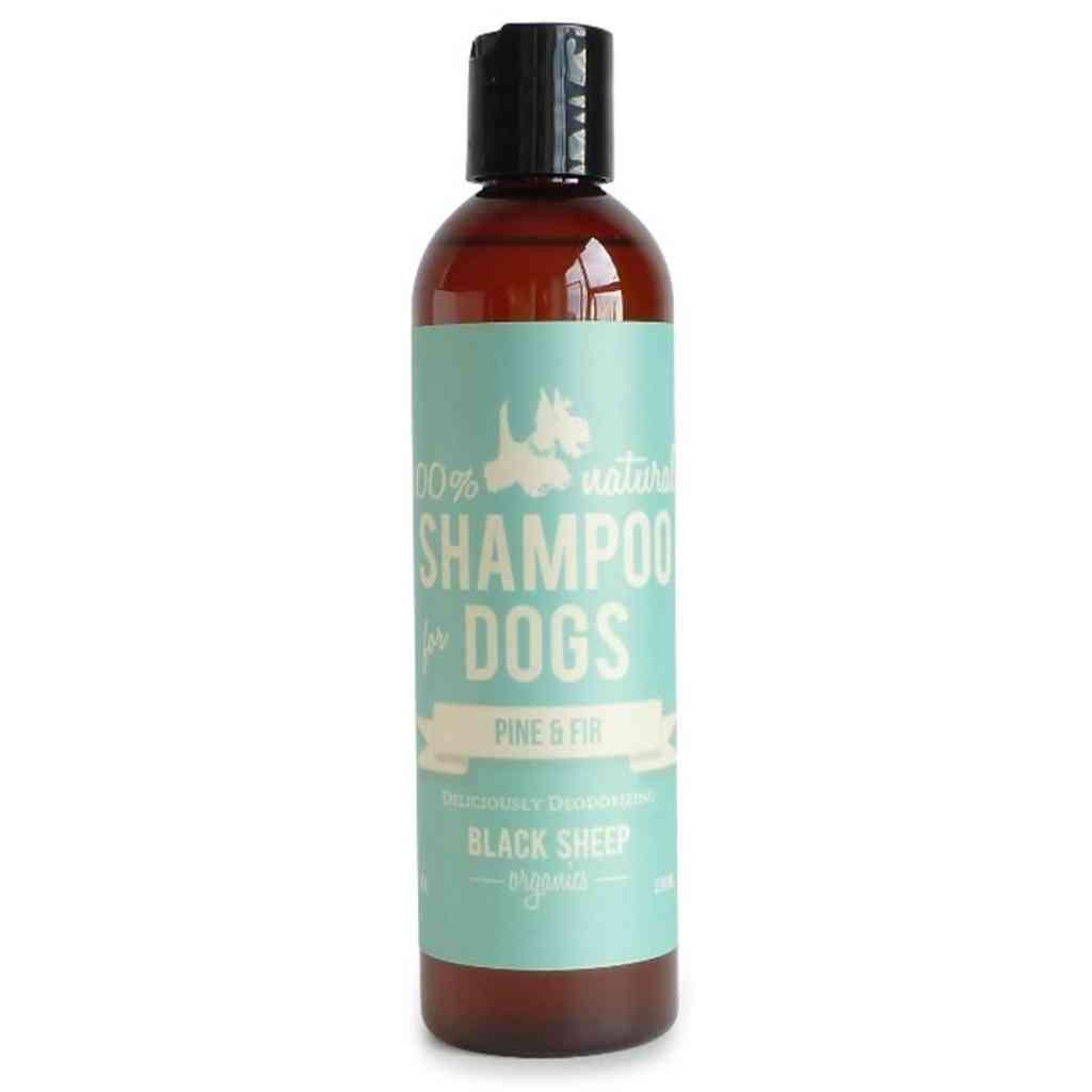 Pine & Fir Shampoo