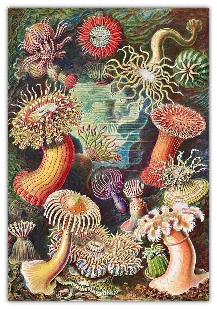 Haeckels Ocean Plants Jigsaw Puzzle #6729