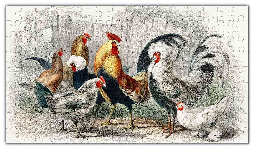Rooster Puzzle #6705