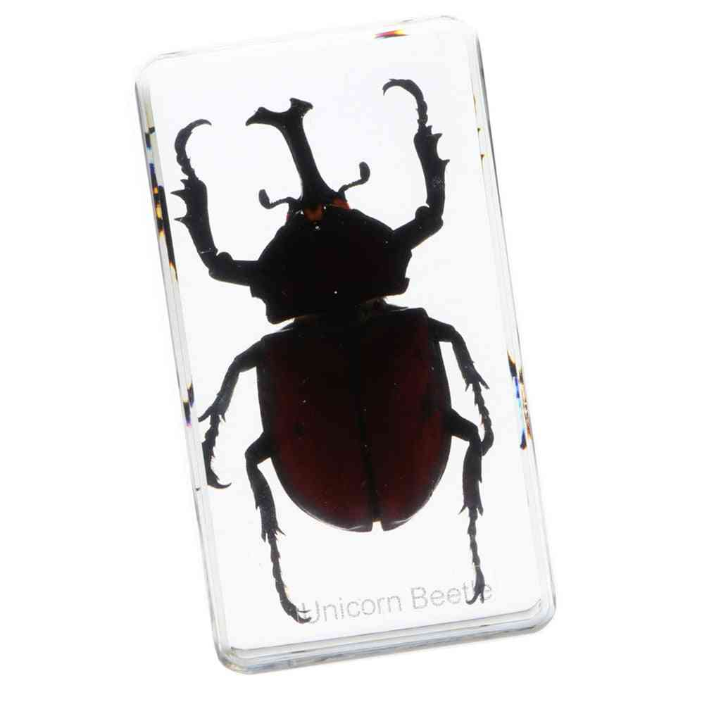 Insect In Resin Specimen Toy, Paperweight