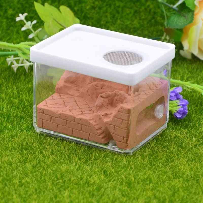 Landscaping Ecological Plaster Ant Farm Square Nest
