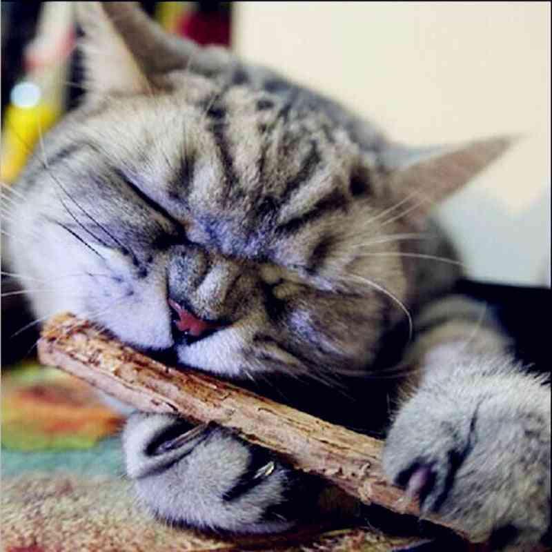 Cat Cleaning Teeth Pure Natural Catnip