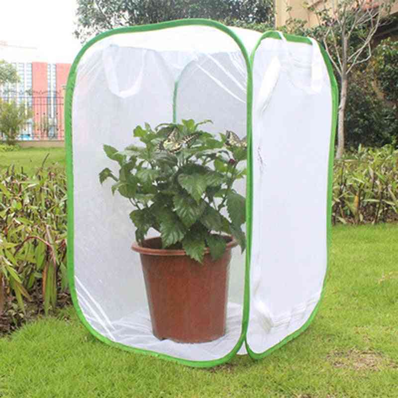 Green Collapsible Insect Cage
