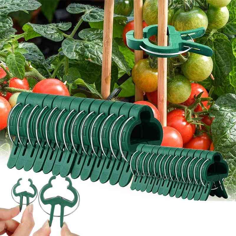 Greenhouse Clamp Stand Plastic Plant Clip