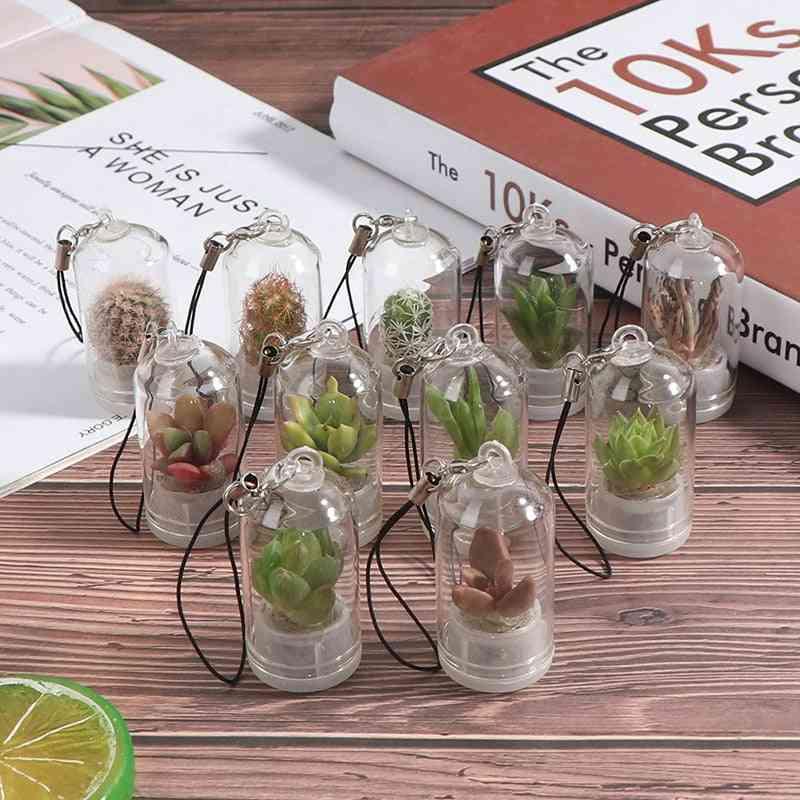 Cactus Miniature Succulent